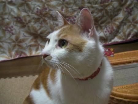 f:id:AkikoHORII:20100508210432j:image