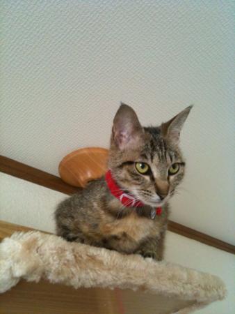 キャットタワー最上段にて(フミコ嬢)