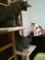 家猫ズ 左からフミコ嬢、ナツキ君、マリナ姉