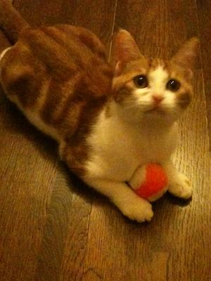 ボール遊び大好き♪サリー