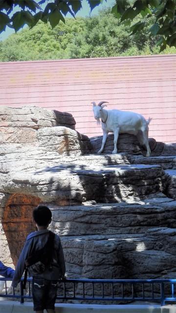 はてな動物園