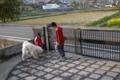 [犬][秋田犬]子どもたちとサッカー