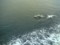 船の横でジャンプするイルカ