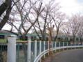 [20100410-長津田散歩]