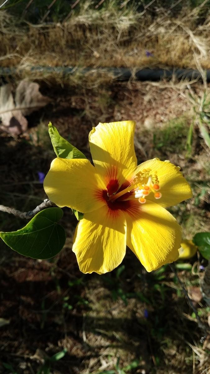 f:id:AlohaFromHawaii:20200602123309j:plain
