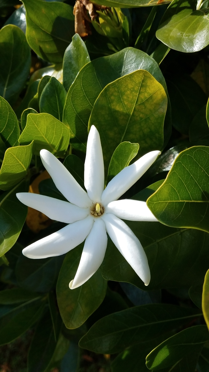 f:id:AlohaFromHawaii:20200602123403j:plain