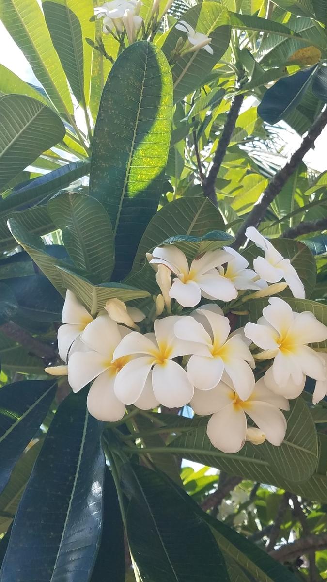 f:id:AlohaFromHawaii:20200614081747j:plain