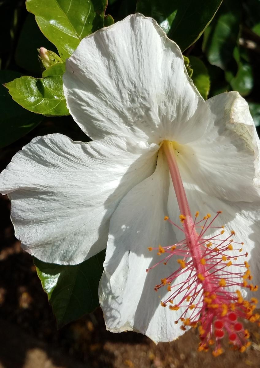 f:id:AlohaFromHawaii:20200614081812j:plain