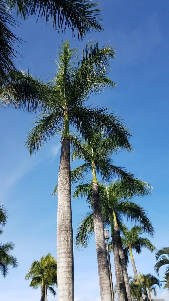 f:id:AlohaFromHawaii:20200622040827j:plain