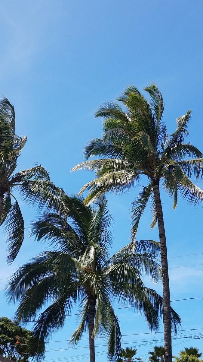 f:id:AlohaFromHawaii:20200728125526j:plain