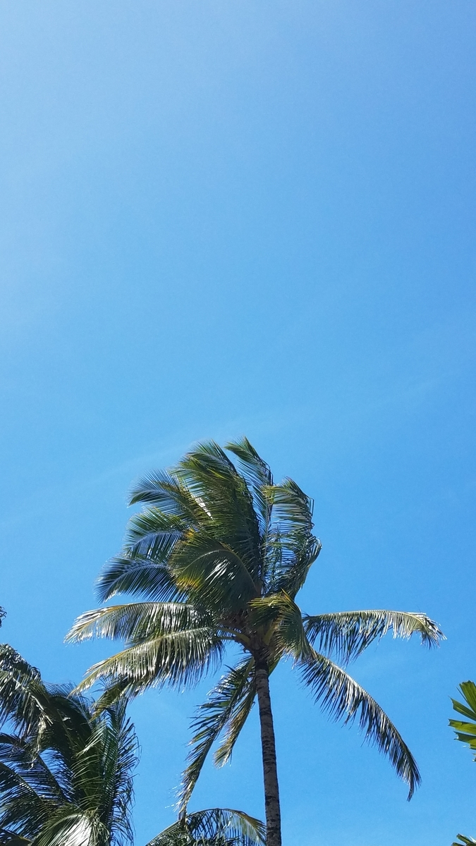 f:id:AlohaFromHawaii:20200728125549j:plain