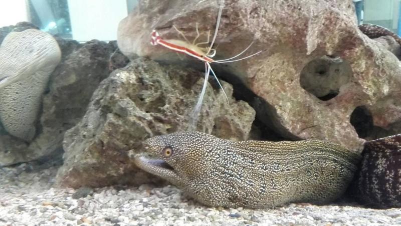 はてな水族館