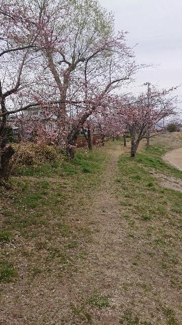 f:id:Amayadori-June:20190410101219j:plain