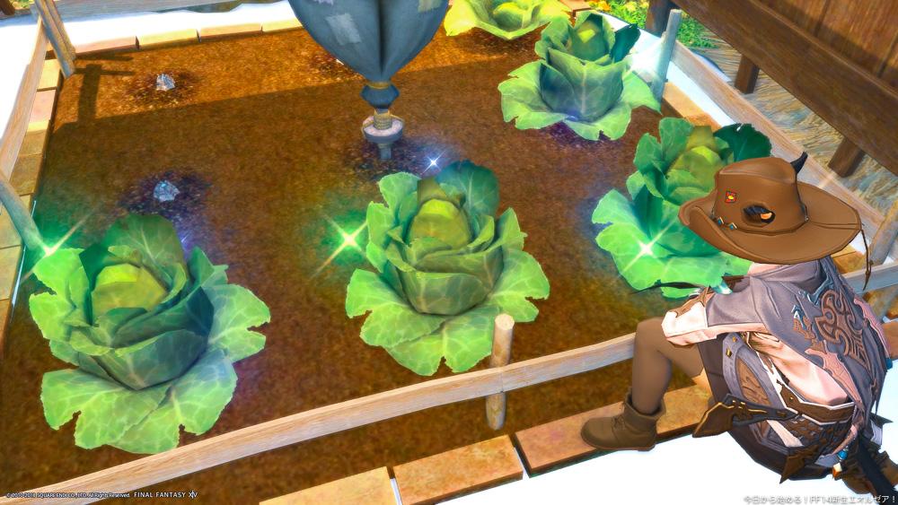 庭の畑で育てている野菜の世話をしているミコッテ。(FF14)
