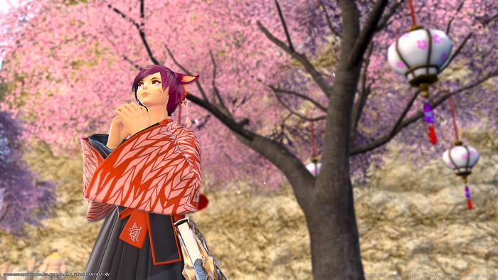 桜の前でパンを食べる和服のミコッテ。(FF14)