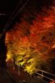 [京都][紅葉][夜景][ライトアップ][駅]