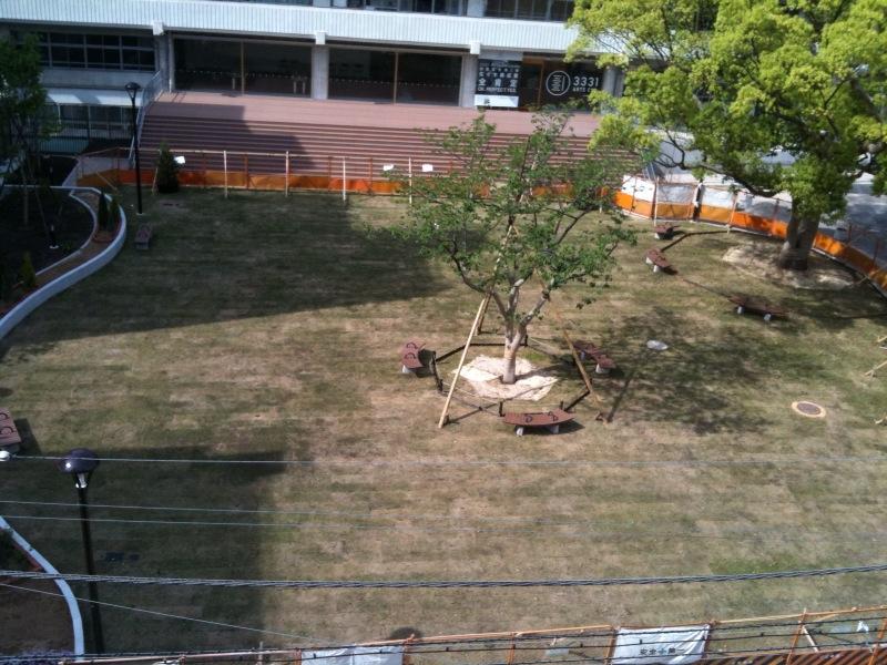 事務書の向かいの公園に芝が!