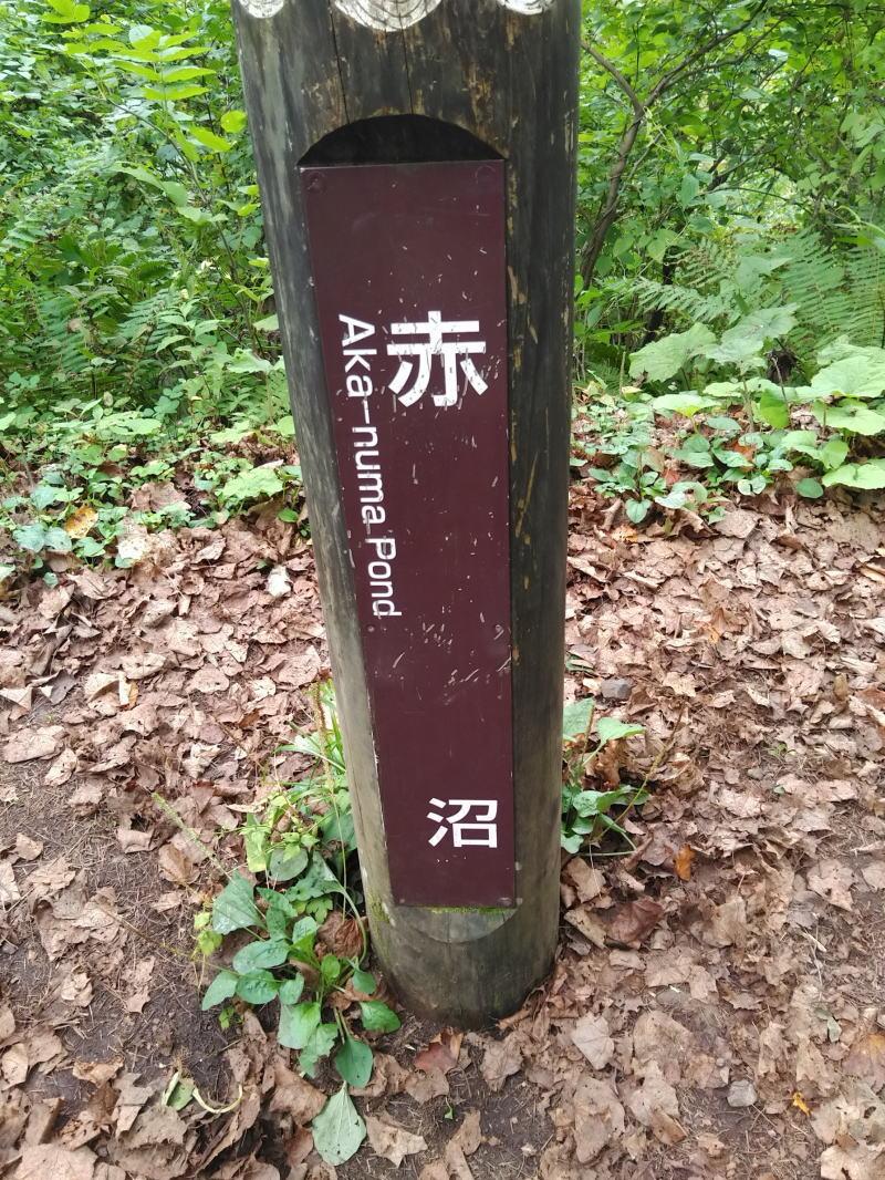 f:id:Aoituki:20200924193319j:plain