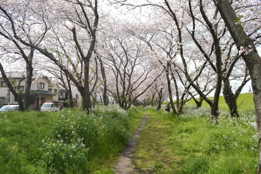 f:id:Aono-Inori:20170409105416j:plain