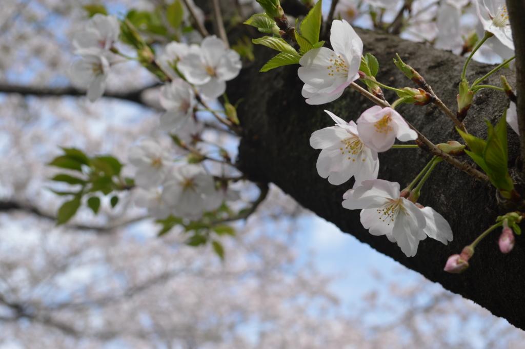 f:id:Aono-Inori:20170409110341j:plain