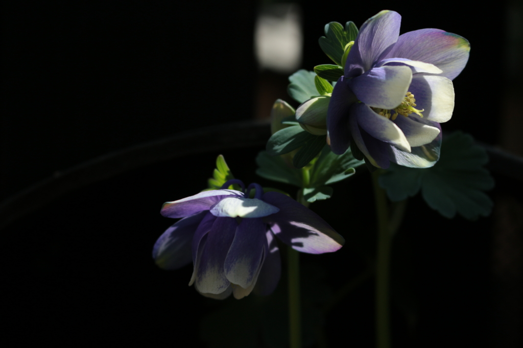 f:id:Aquamarine_tulipano:20160328210948j:plain