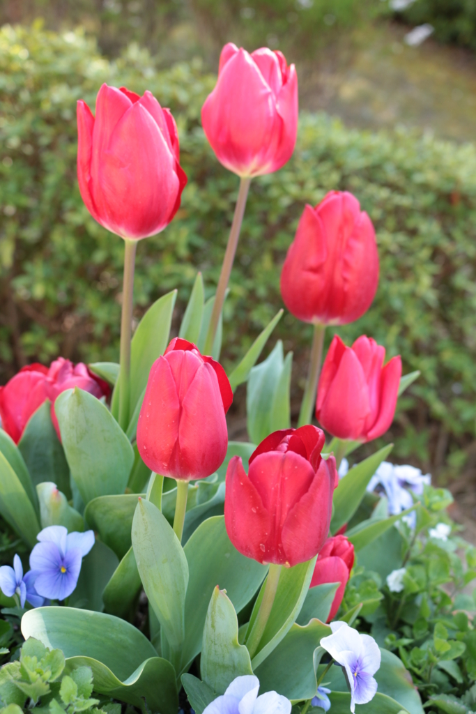 f:id:Aquamarine_tulipano:20160328214556j:plain