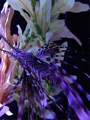 f:id:Aquamarine_tulipano:20160915002346j:image