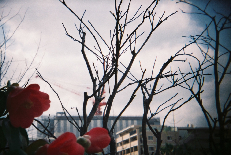 f:id:Aquamarine_tulipano:20180409190849j:image