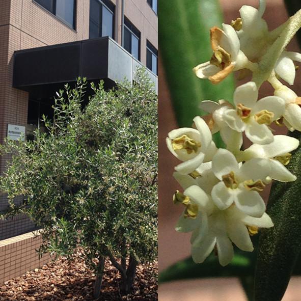 f:id:Arabidopsis:20190524101238j:plain