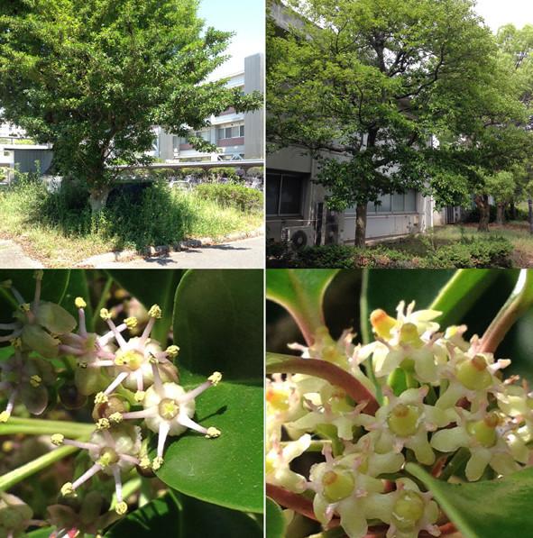 f:id:Arabidopsis:20190524101743j:plain