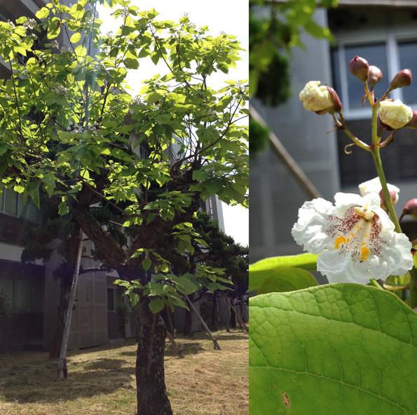 f:id:Arabidopsis:20190601135510j:plain