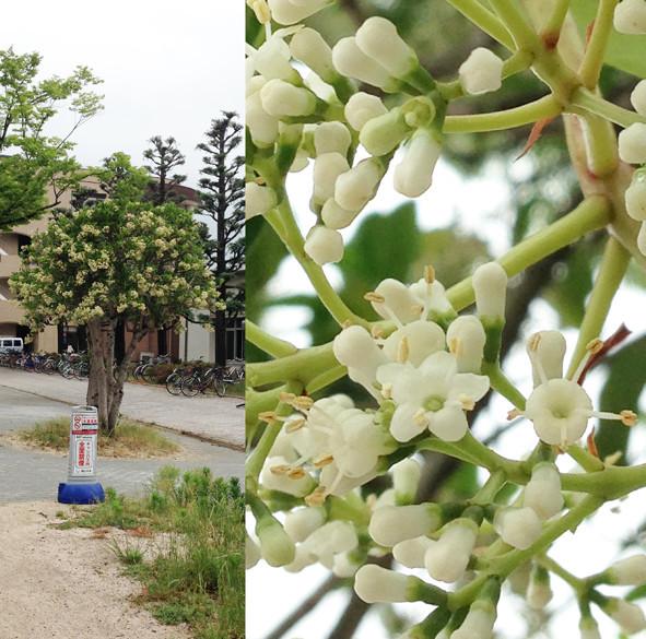 f:id:Arabidopsis:20190607141040j:plain