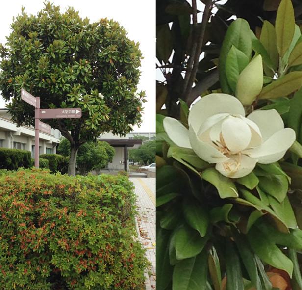 f:id:Arabidopsis:20190607143718j:plain