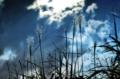 京都新聞写真コンテスト 台風一過