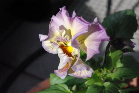 f:id:Artemis:20090110124147j:image:w300