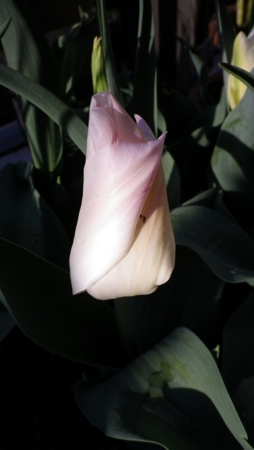 f:id:Artemis:20110412064504j:image
