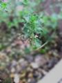 f:id:Artemis:20110709092217j:image:medium