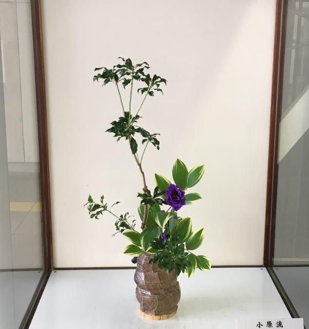 f:id:Aru-Kaishain:20190101181112j:plain:w50