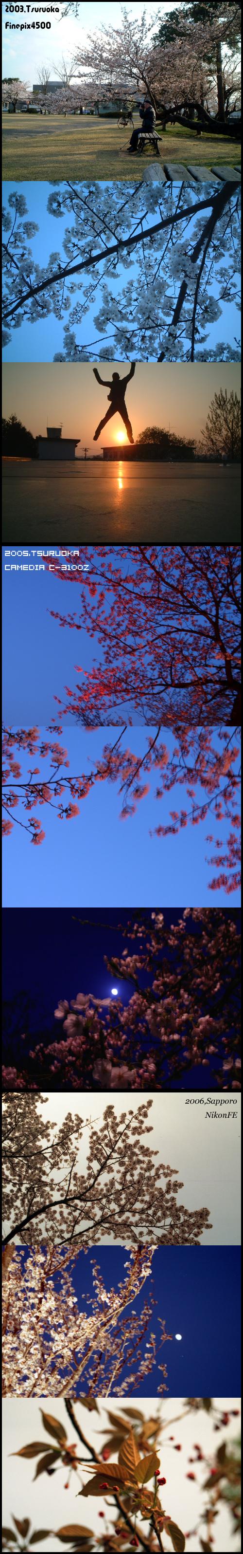 桜の季節にふり返る