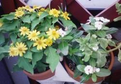 花々_20080608