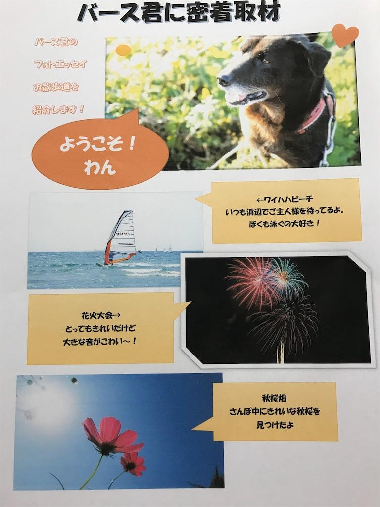 f:id:Atelier-sunflower:20191102000817j:image