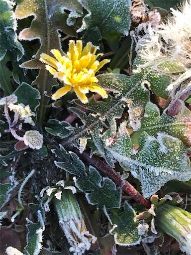 f:id:Atelier-sunflower:20191218004914j:image