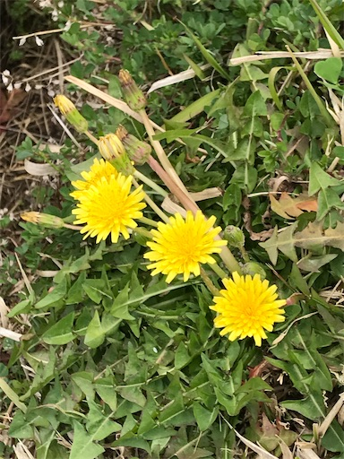 f:id:Atelier-sunflower:20200326144741j:image