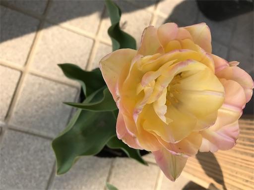 f:id:Atelier-sunflower:20200409101753j:image