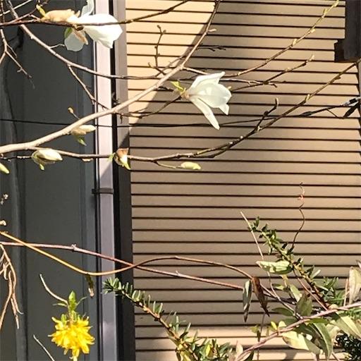 f:id:Atelier-sunflower:20210327221517j:image