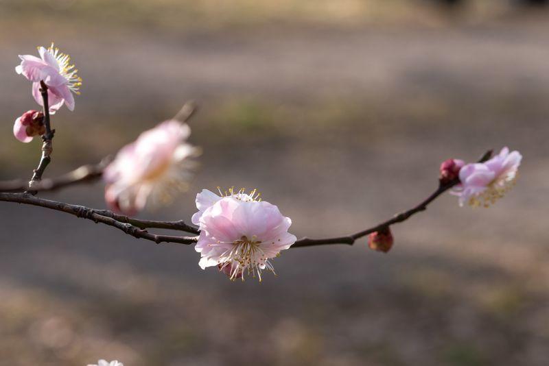 f:id:Atsuzo-SUN:20210301210303j:plain