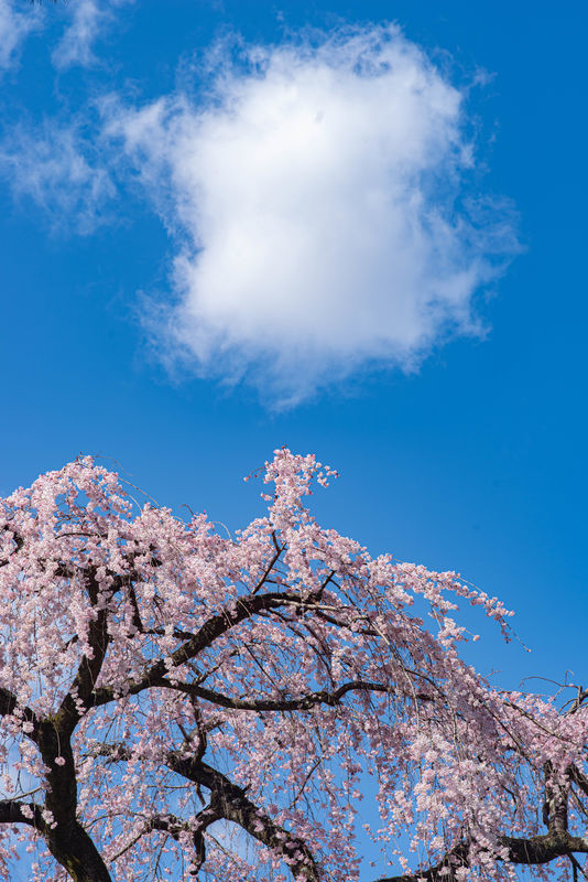 f:id:Atsuzo-SUN:20210314203537j:plain