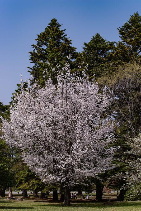 f:id:Atsuzo-SUN:20210330153046j:plain