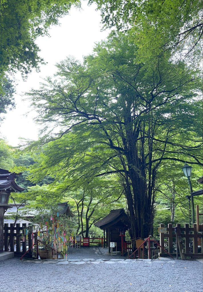 f:id:Atsuzo-SUN:20210801200856j:image