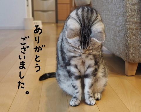f:id:Ayako28:20170716012922j:plain